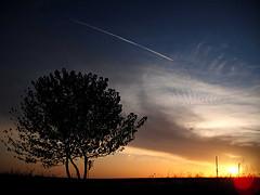 木と夕陽.jpg